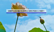 【お墓参りの花の選び方】気持ちよくお供えするポイントを紹介!