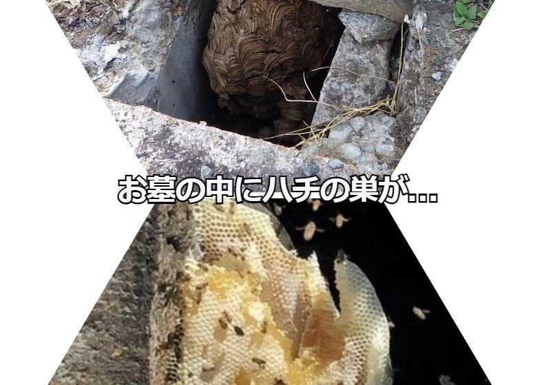 お墓の中にハチが巣を作ったりします