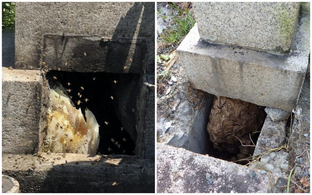 お墓の中にできたハチの巣