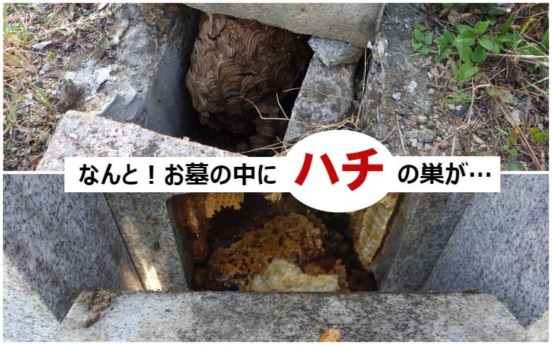 なんと!お墓の中にハチの巣が…