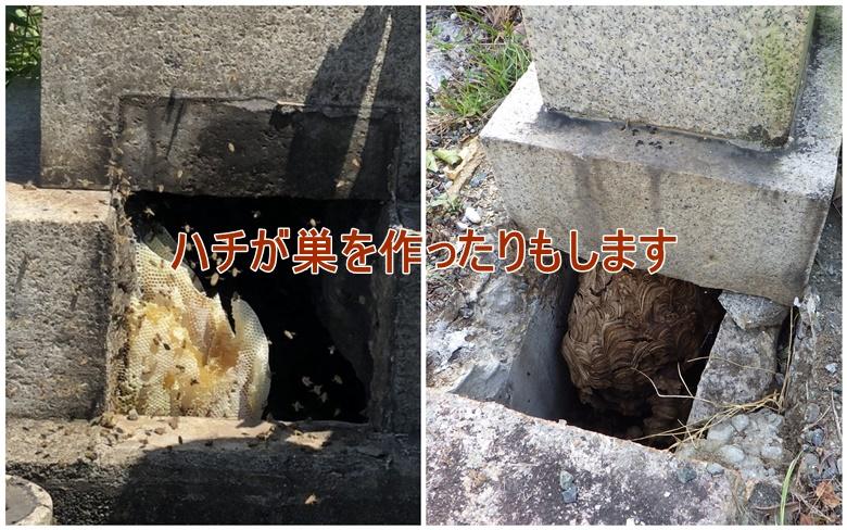 お墓の中にハチが巣を作ったりもします